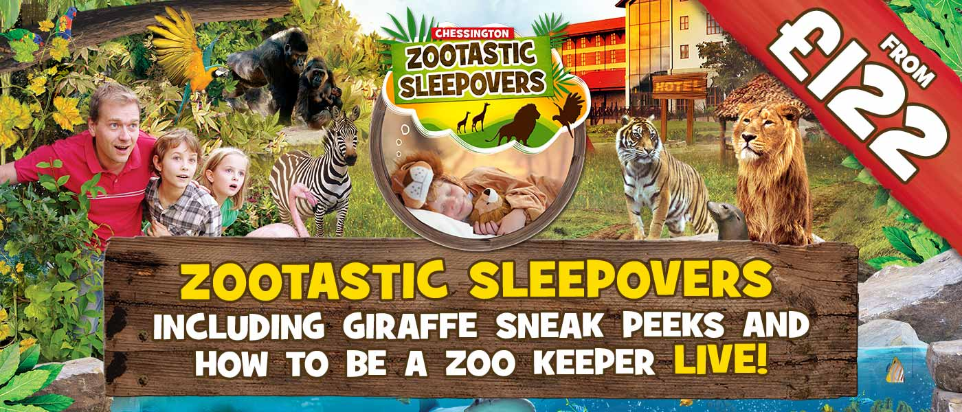 Zootastic Sleepovers as Chessington Resort