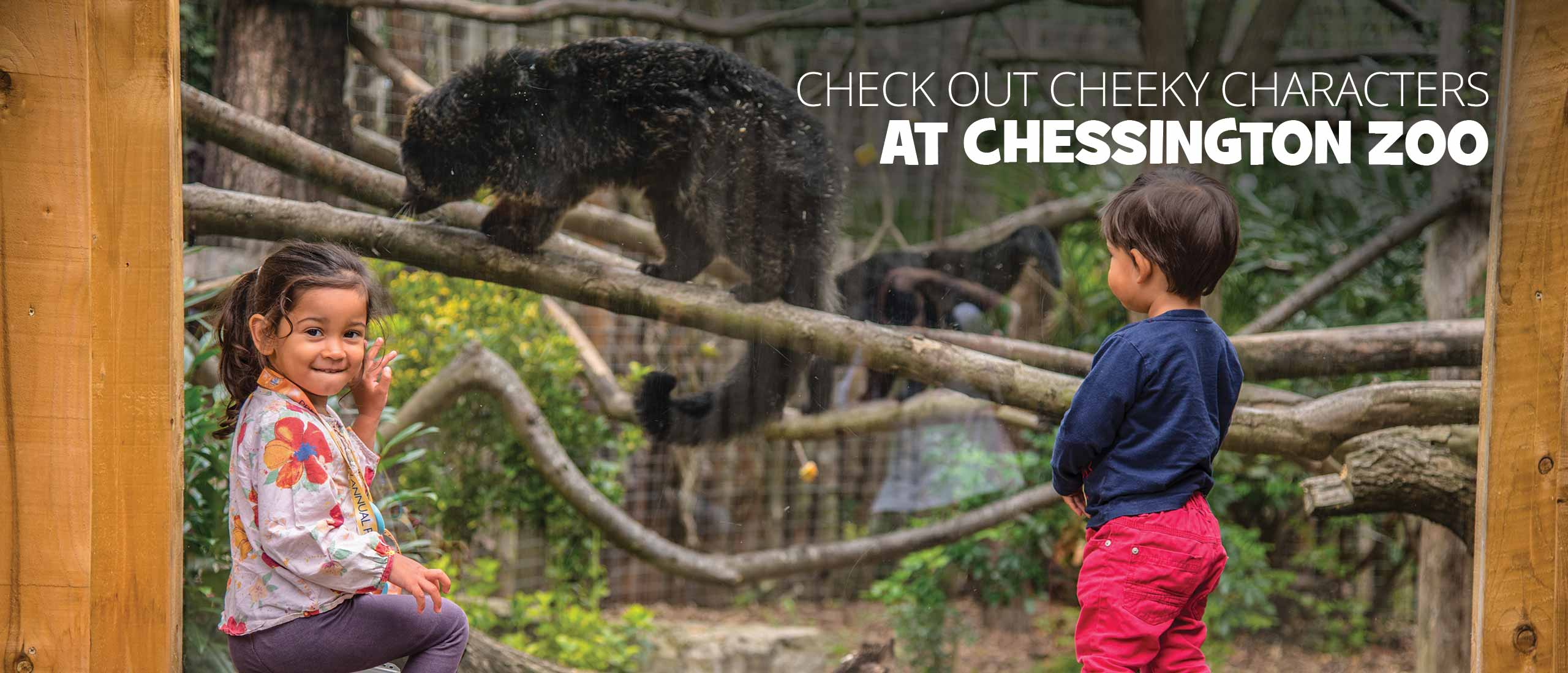 Explore the zoo at the Chessington World of Adventures Resort 2019